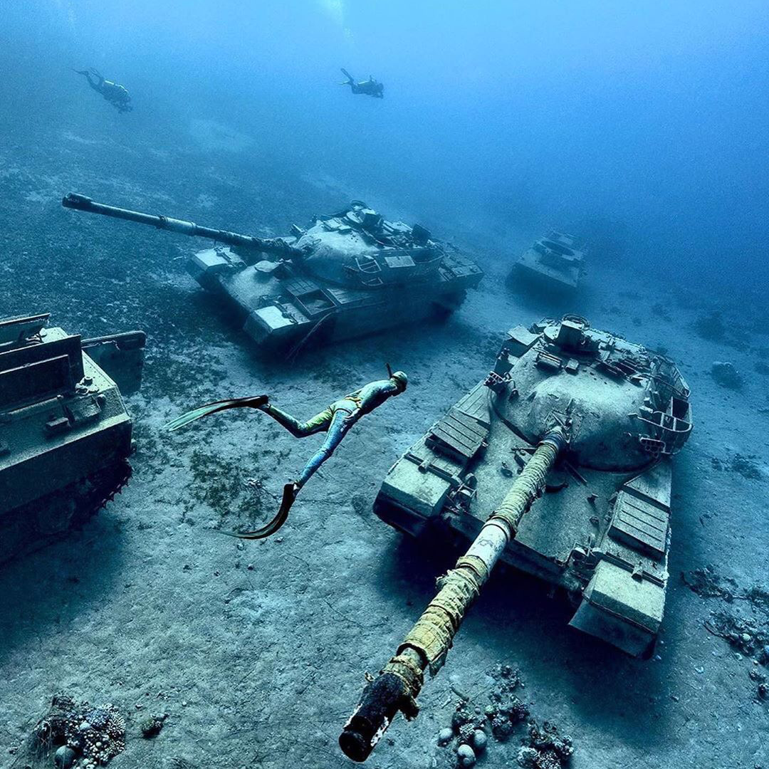 Terrestrial Life Underwater