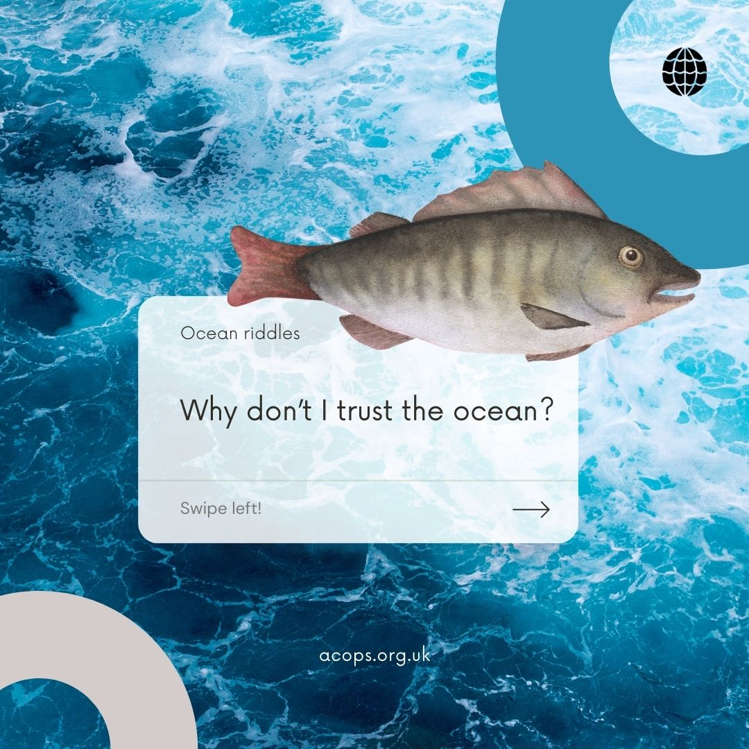 Fishy01_1800x1800